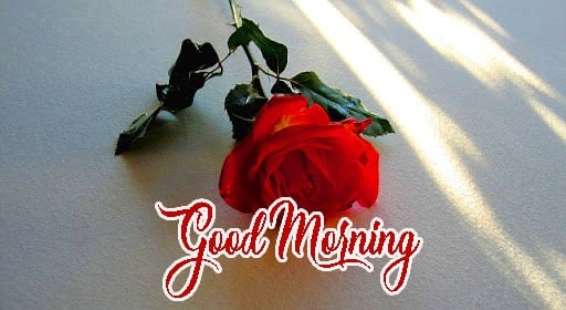 Red Rose Beautiful Free Romantic Good Morning Images Wallpaper