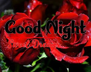 Red Rose Free Good Night Tuesday Images Download
