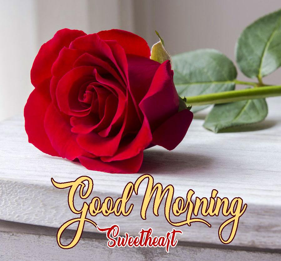 Rose Beautiful Free Romantic Good Morning Images