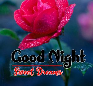 Rose Free Good Night Tuesday Images Download