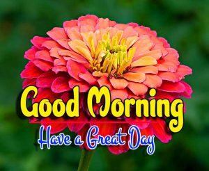 Spcieal Good Morning Download Hd