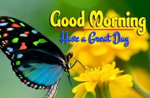 Spcieal Good Morning Free Pictures