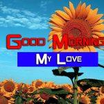 Sunflower Good Morning Images Photo