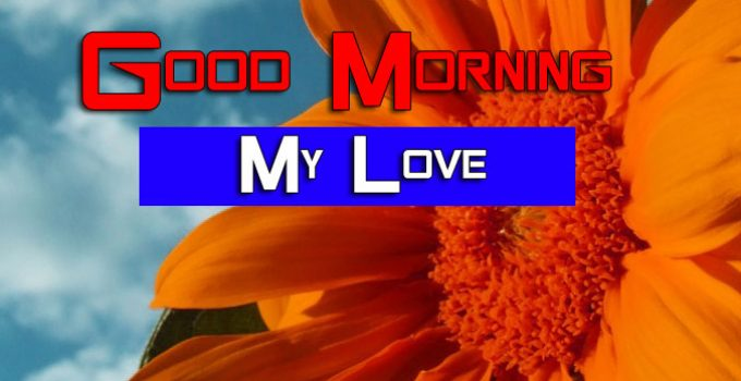 Sunflower Good Morning Images Pictures