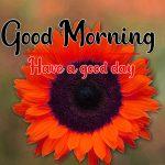 Sunflower Good Morning Photo Free