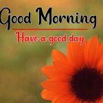 Sunflower Good Morning Pics hd