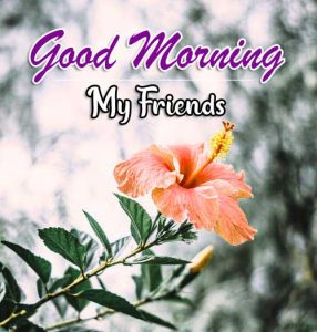 Top Good Morning Download Images