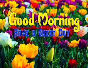 Top Good Morning For Whatsapp Photo Free Download