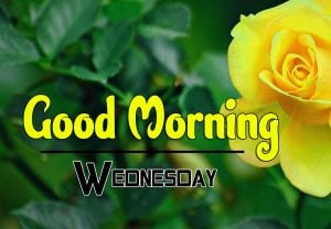 Top Good Morning Wednesday PIcs Free Download