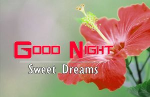 Top Good Night For Friends HD Download