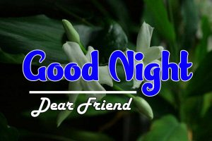 Top Good Night For Friends Photo