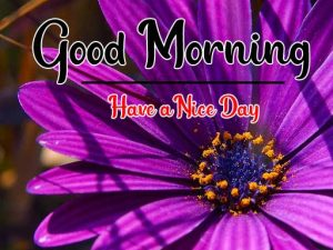 new Good Morning Images photo hd