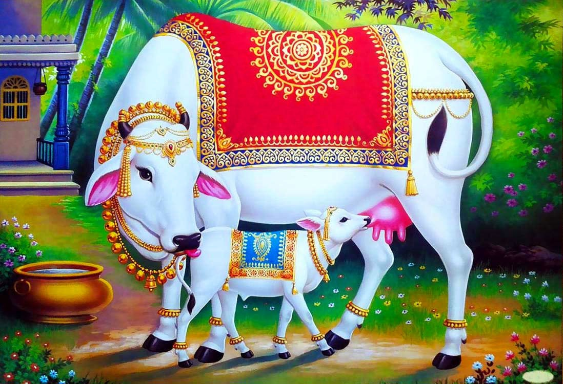 Cow Nice Whatsapp DP Images Download