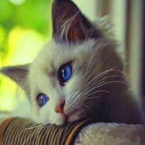 I Am Sad Dp Images Symbal