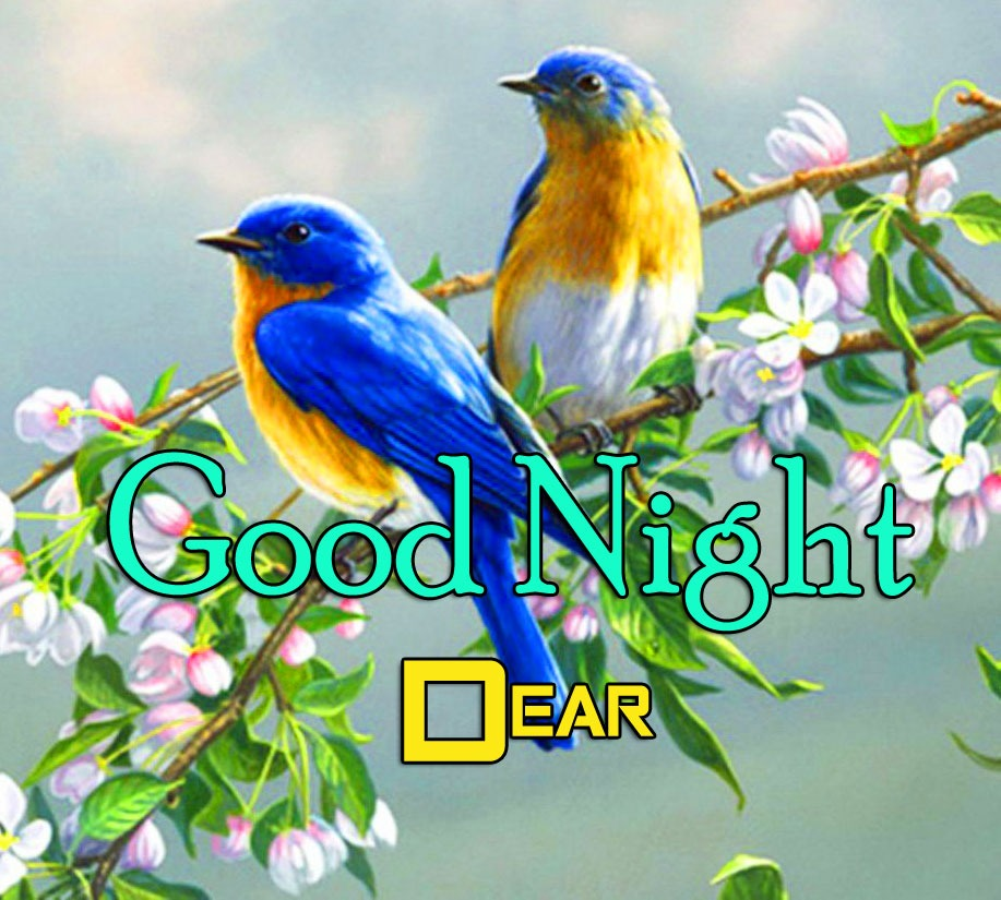 New Best Bird Girlfriend Good Night Wishes Wallpaper Download