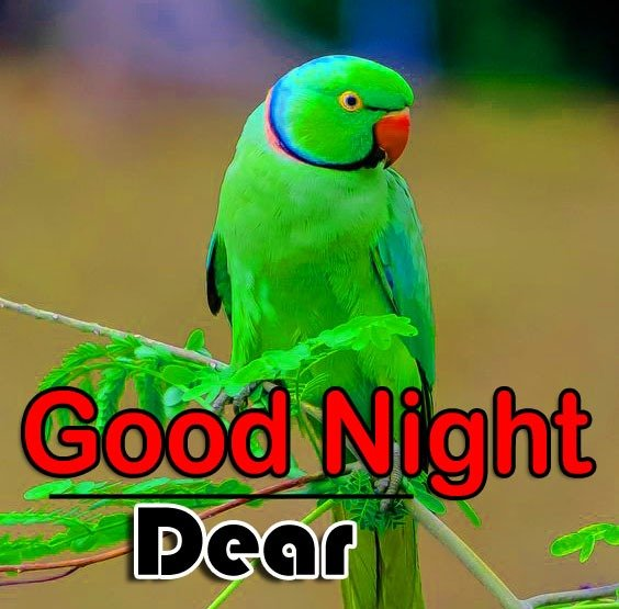 Beautiful Good Night Pictures