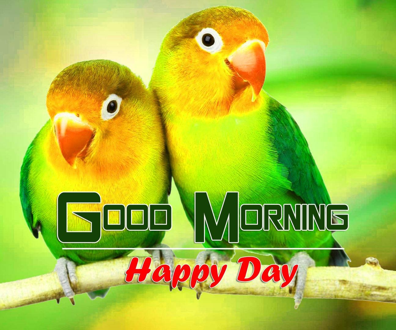 Beautiful tropical birds Co