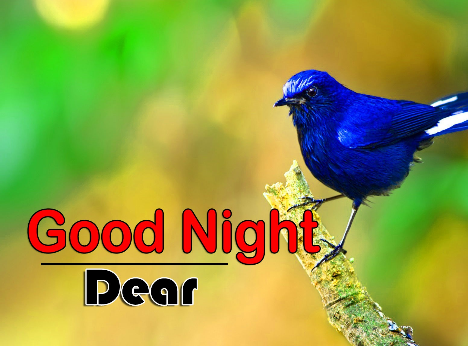 Best Good Night Images Hd Free