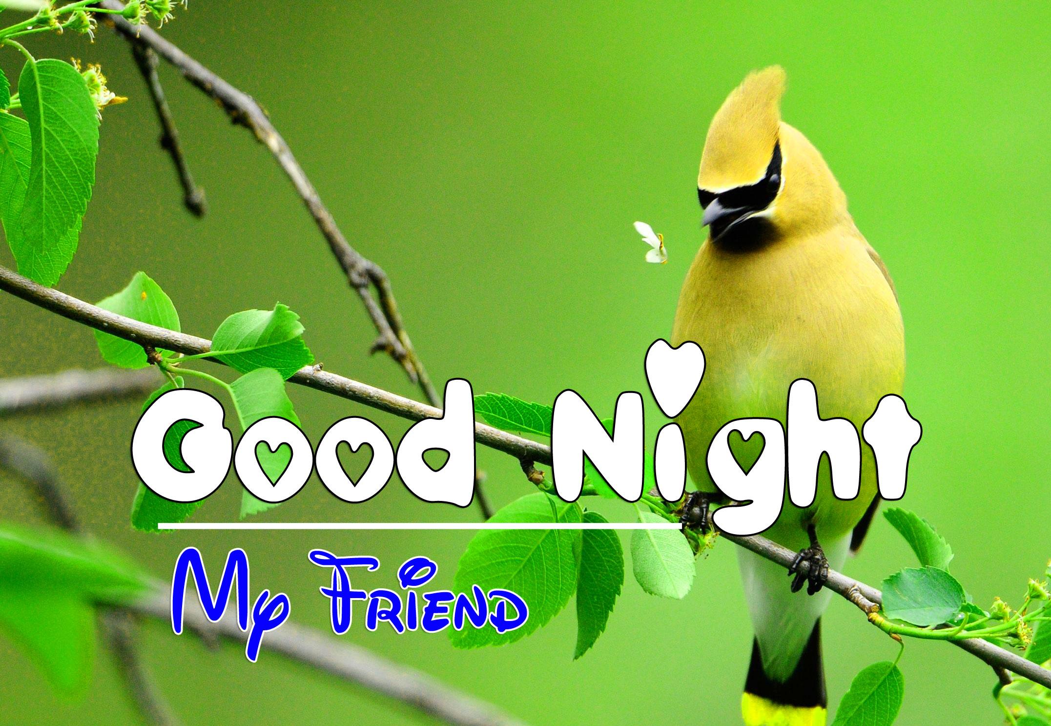 Bird Good Night Images