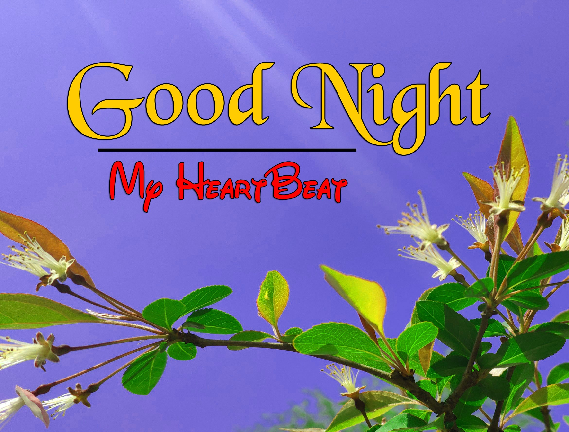 Free Good Night Download Images