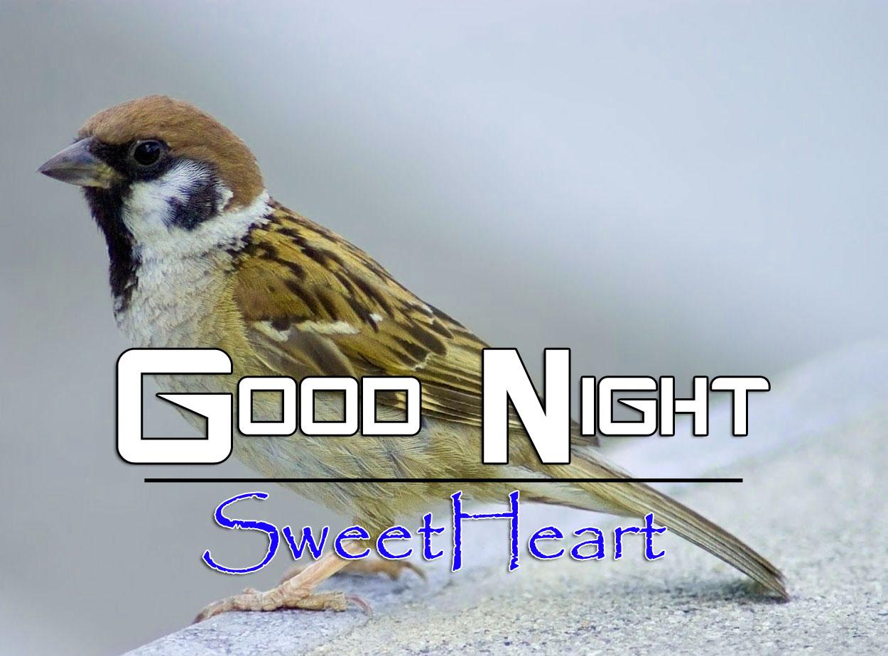 Free Good Night Download Pics