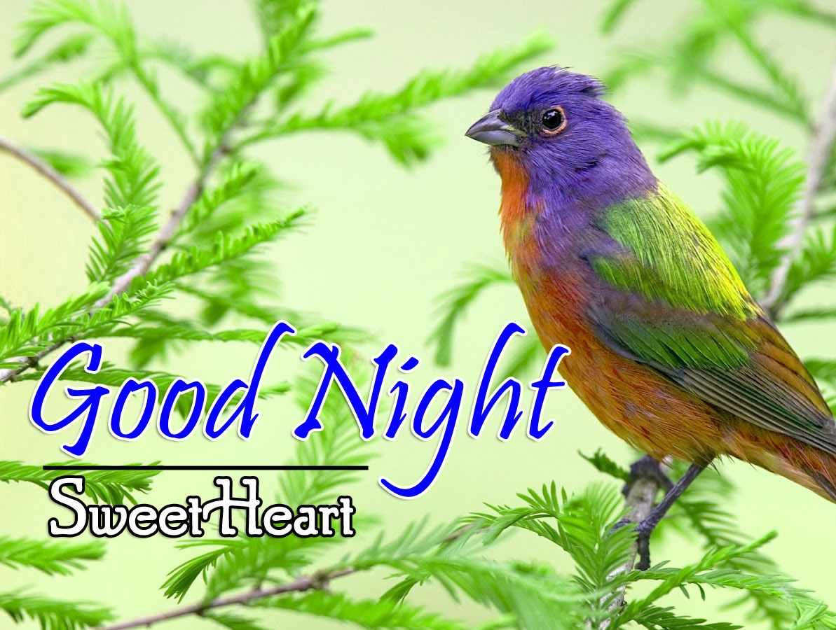 Good Night IMages Pictures