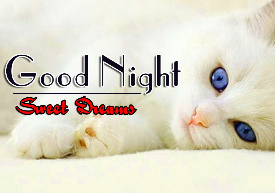 Good Night Images For Cat