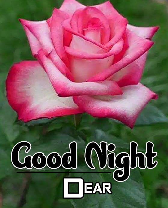 Good Night Images For Flower