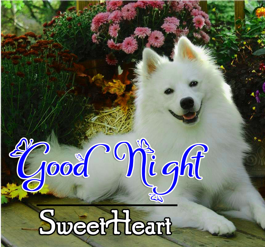 Good Night Pictures Images