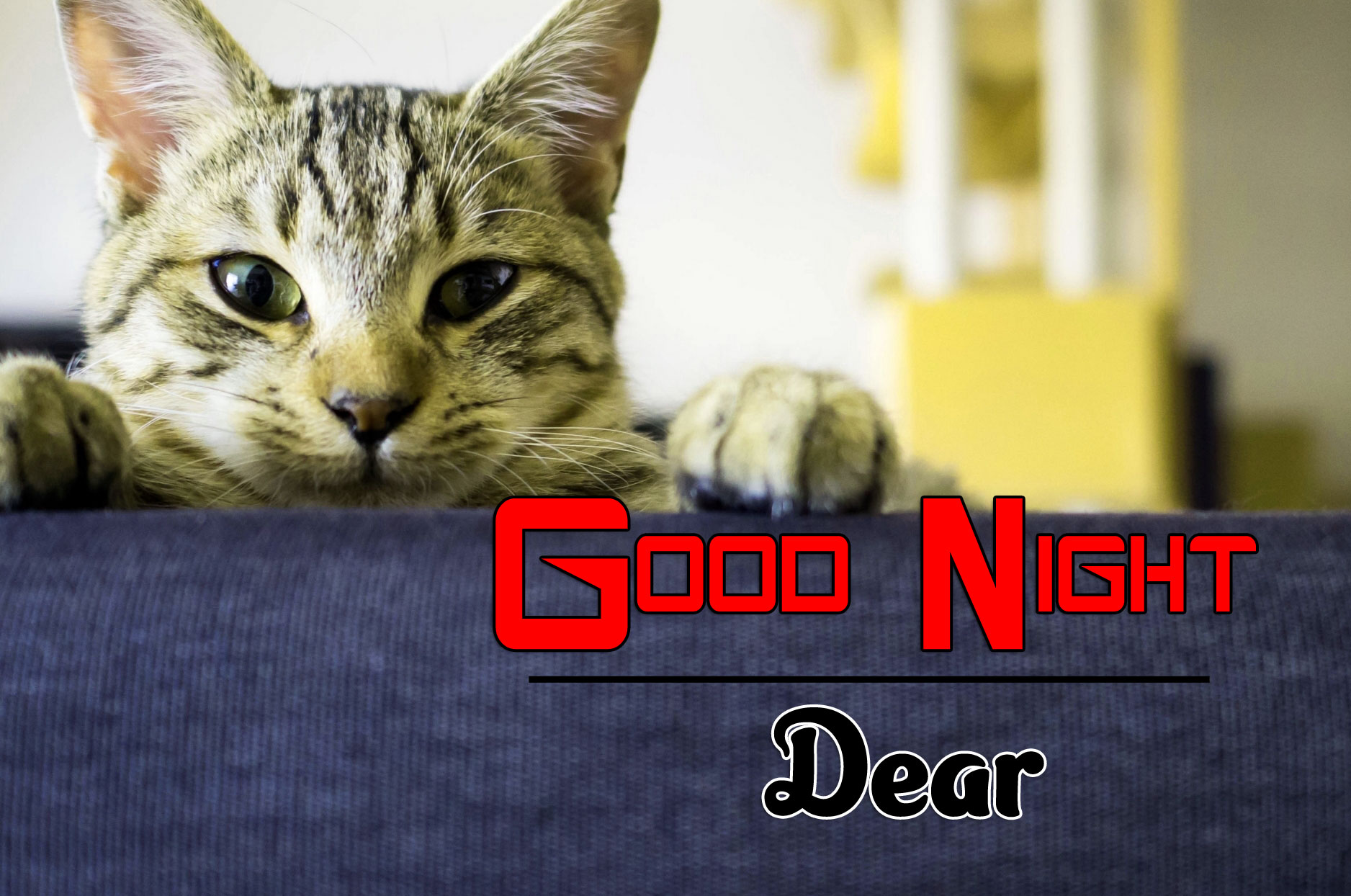Good Night Pictures Photo