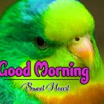 HD Romantic Good Morning Pictures Photo