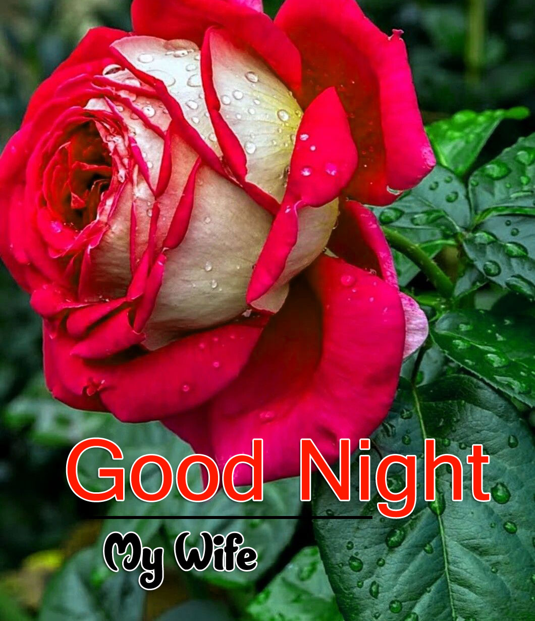 Latest Good Night Download Images Free