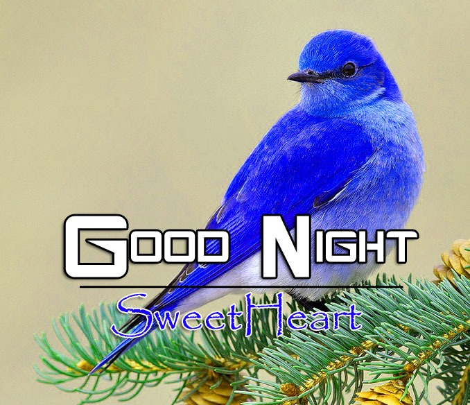 Latest Good Night Images Picturs