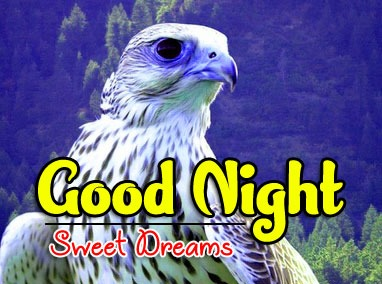 Latest Good Night Pics Download