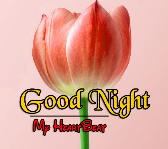 Latest Good Night Wallapper Images