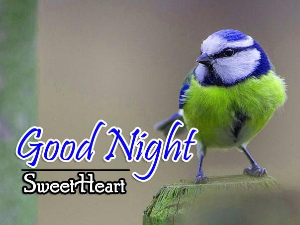Latest Good Night