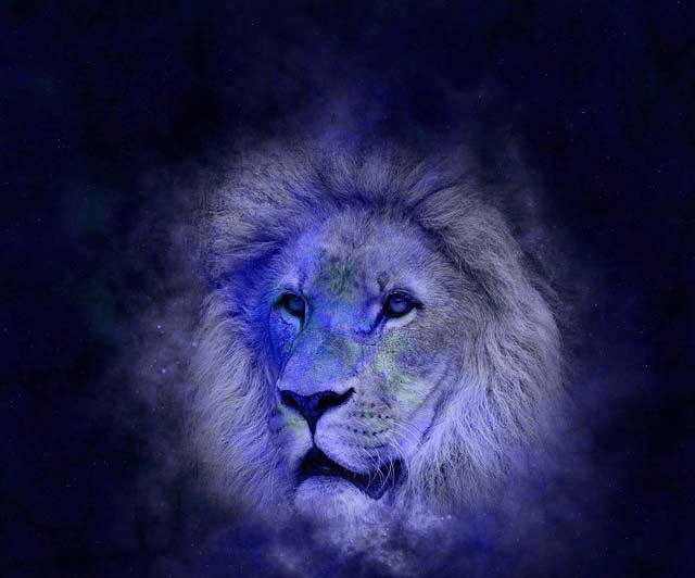 Lion Free Whatsapp Dp Pics Download
