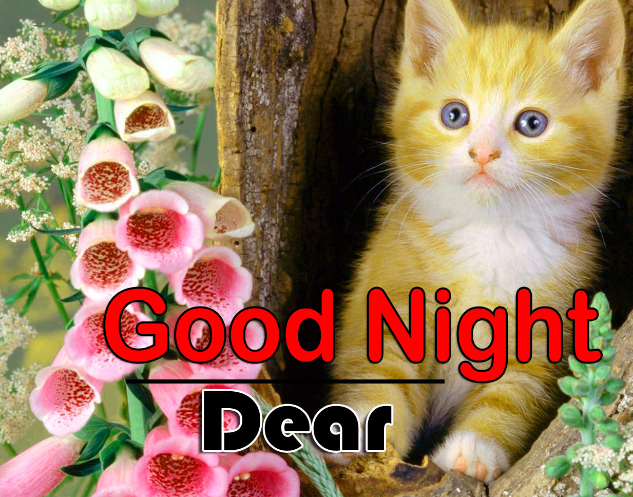 New Good Night Images Hd