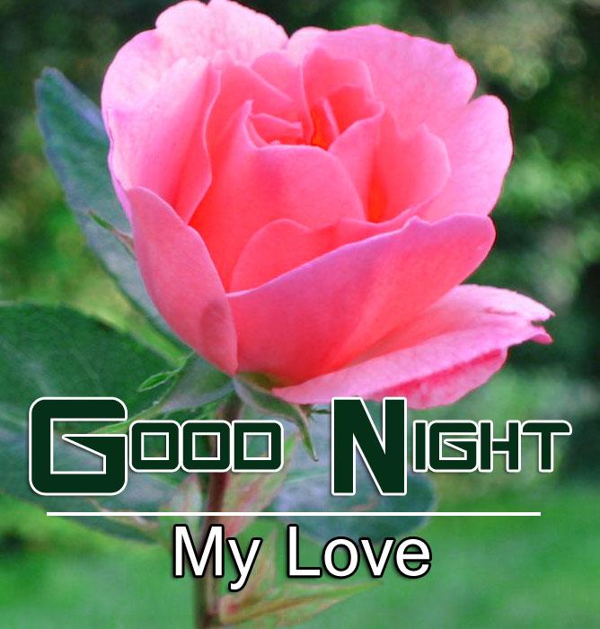 Pink Rose Good Night Images