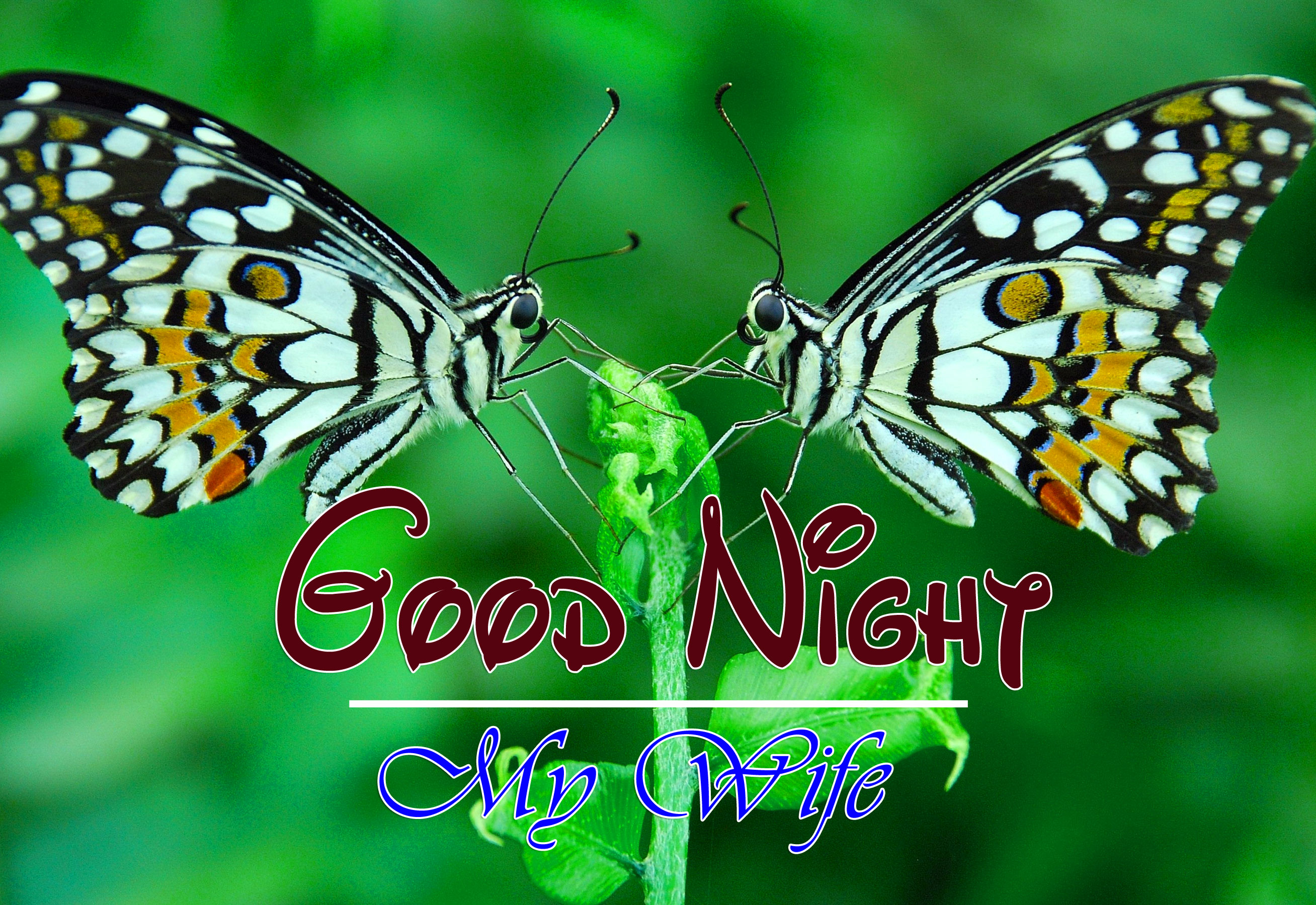 Top Good Night Images Free