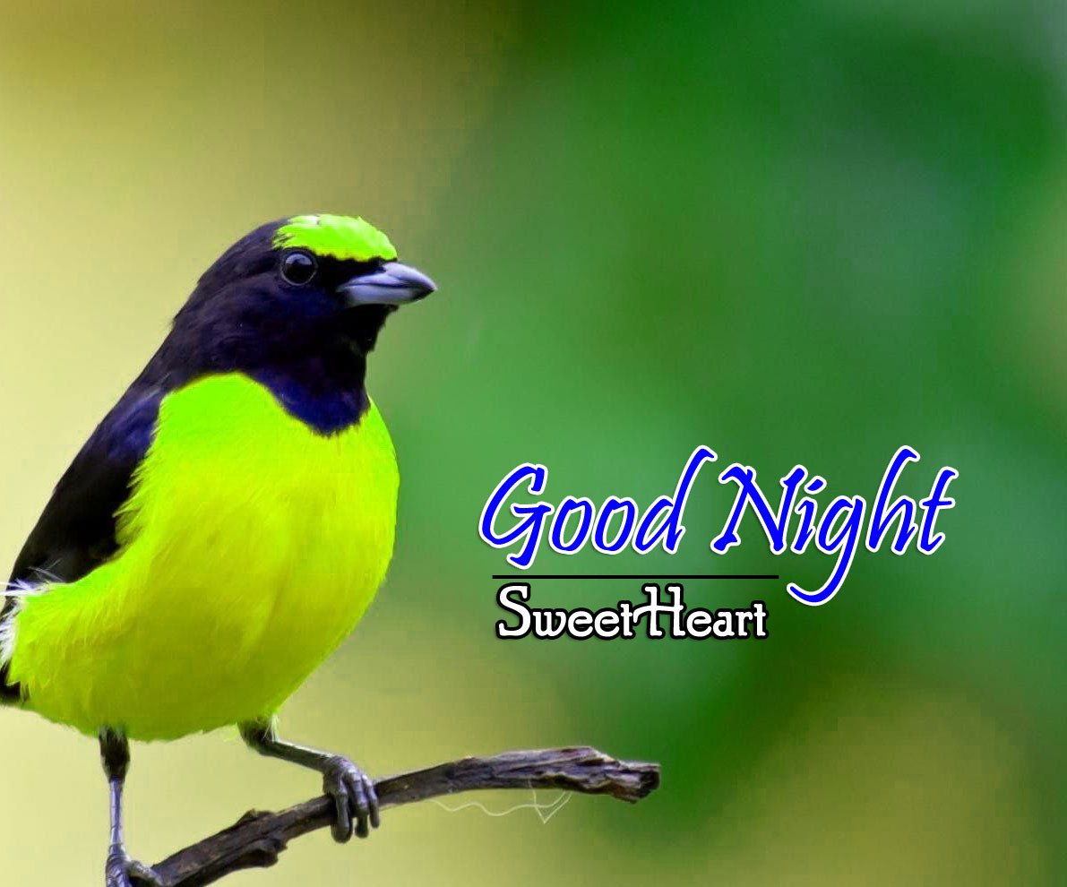 Top Good Night Wallpap er Download Free