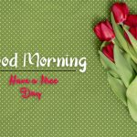 beautiful flower good morning images photo download