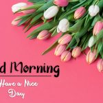 beautiful flower good morning images photo free download
