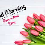 beautiful flower good morning images pictures free download