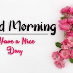 beautiful flower good morning images pictures photo hd