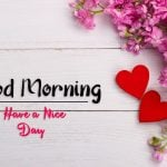 beautiful flower good morning images wallpaper for download