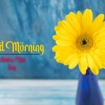 beautiful good morning images pictures free download