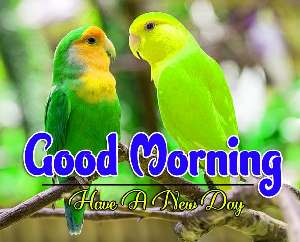 birds branches parrots a co
