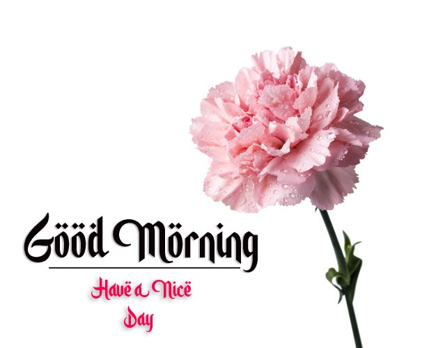 flower good morning images photo hd