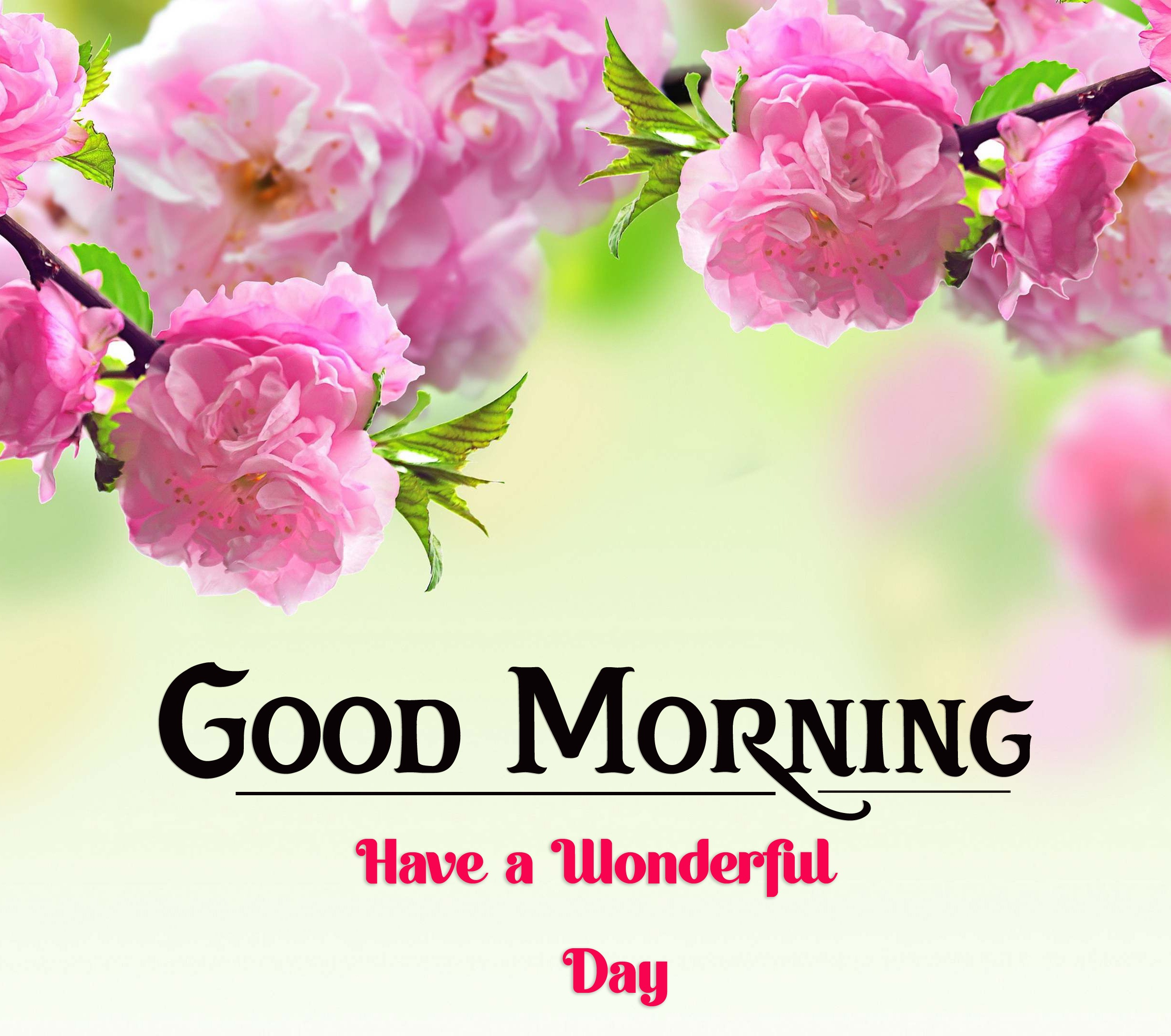new good morning images photo for download